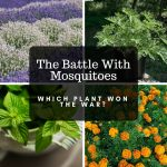 the battle with mosquitoes