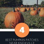 best pumpkin patches near knoxville