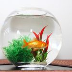 How Owning a Pet Fish Improves Mental Health