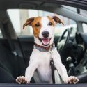 Items Every Dog Owner Should Have in Their Car