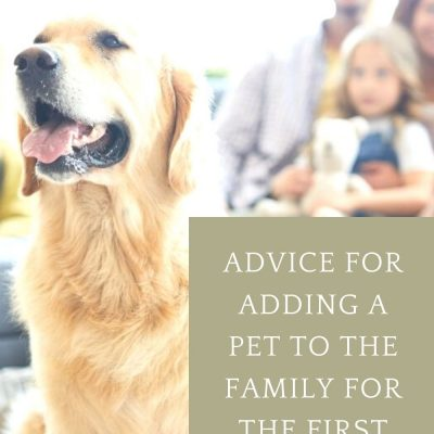Advice for Adding a Pet To the Family for the First Time