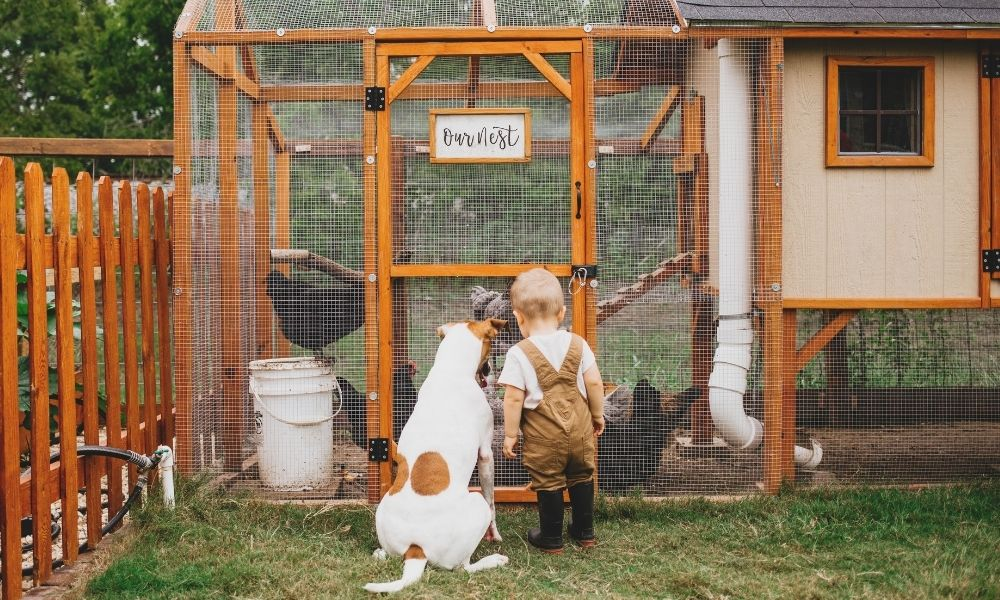 The Benefits of Keeping Backyard Chickens
