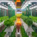 Are Hydroponic Vegetables Healthy?