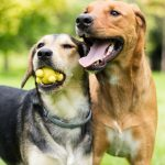 The Various Benefits of Boarding Your Pup