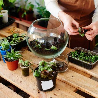 Creative Ways to Display Your Indoor Plants